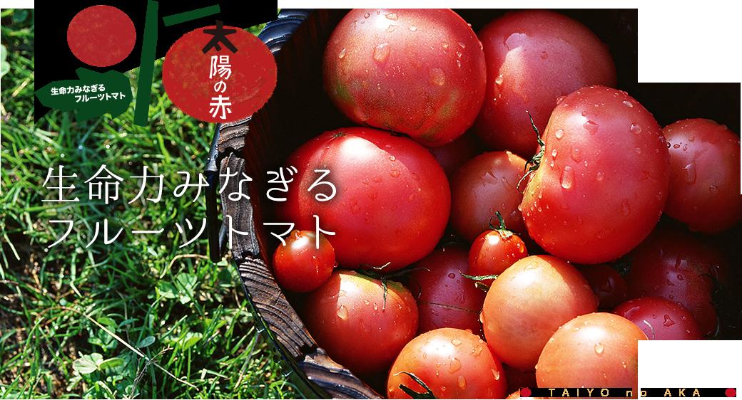 生命力みなぎるフルーツトマト