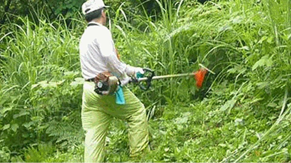 剪定・草刈り・その他